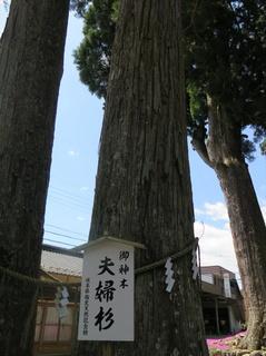 郡上戸隠神社夫婦杉.JPG